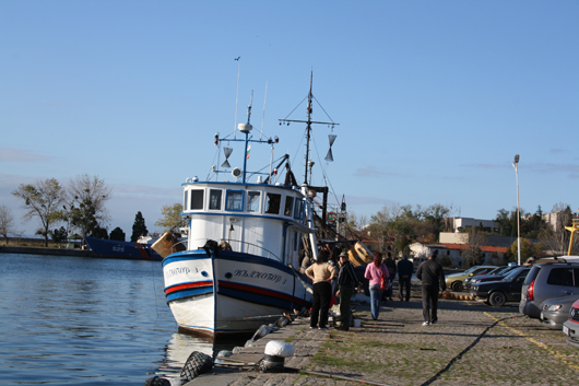 Забраняват улова на есетрови риби в българската акватория на Черно море и Дунав 1