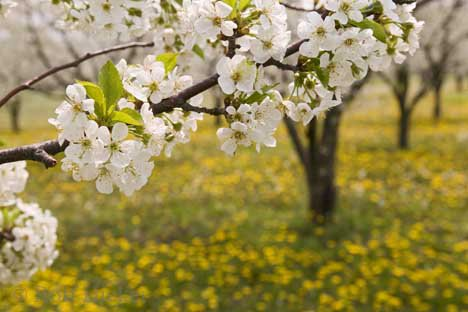 Теодора Стефчева: Пролетно въодушевление 1