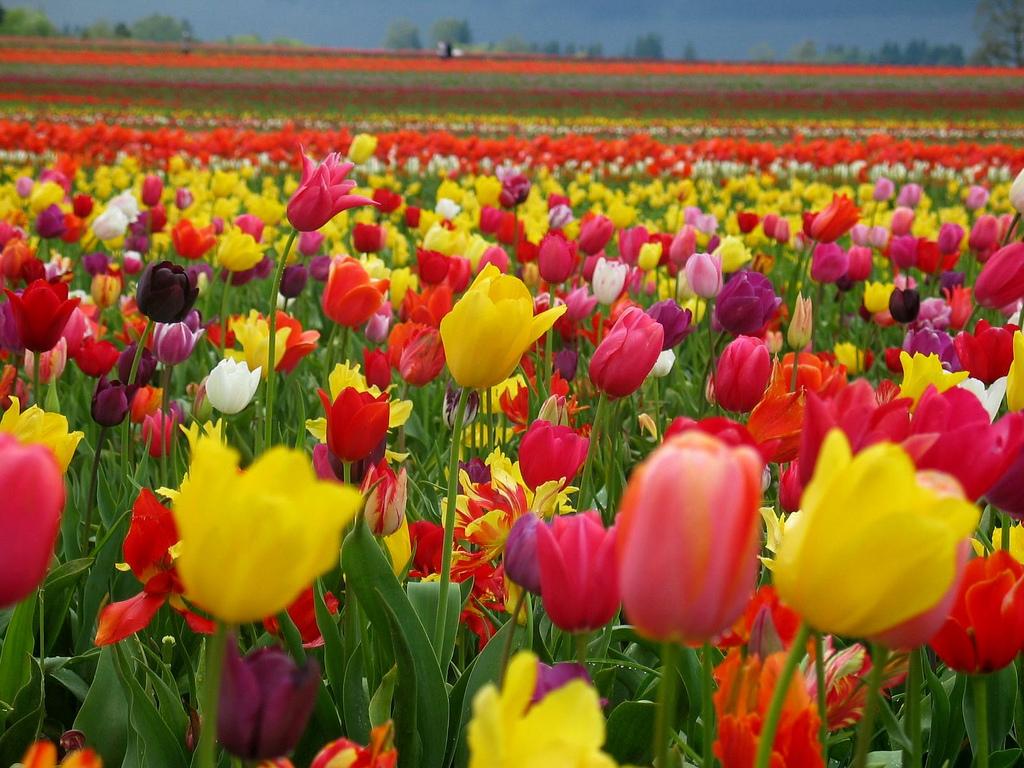 Днес е Цветница! Празнична програма в Созопол 4