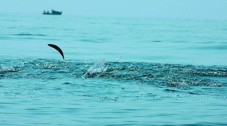 Георги Пейчев: Вчера излезе паламудът, но пострадалите от делфините ще са много повече 1